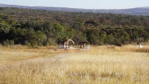 Das Interesse der Giraffen in Südafrika an Walter Kirschs ASH 25 M ist groß.